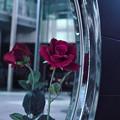 Photos: 鏡の中の私