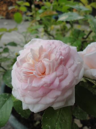 粉粧楼~夏の花