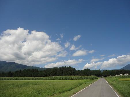 我が家への道(⌒~⌒)