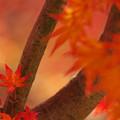 Photos: 赤い季節