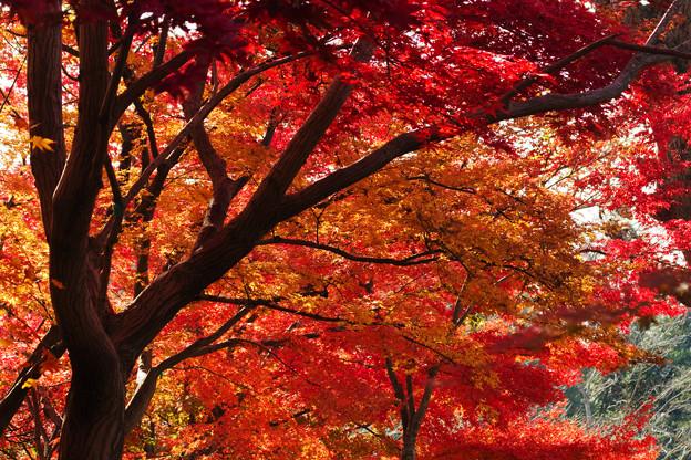 赤や黄の森