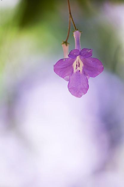 柔らかな花の色