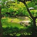Photos: 染まる緑
