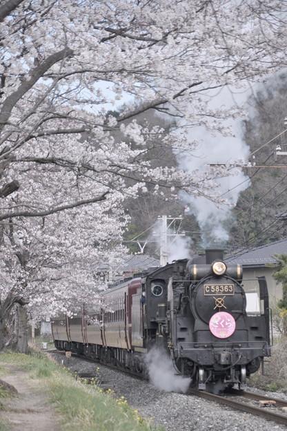 長瀞の桜とパレオエクスプレス