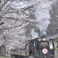 Photos: 長瀞の桜とパレオエクスプレス