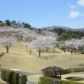 写真: 足利城ゴルフ倶楽部4番Hティーグラウンドから見た桜