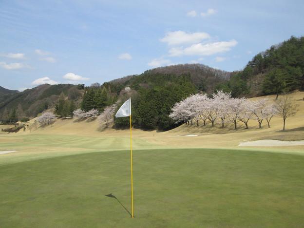 写真: 足利城ゴルフ倶楽部10番Hグリーンからの桜