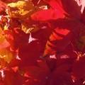 晩秋の落ち葉たち in 佛通寺