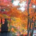 Photos: 御仏さまも紅葉狩り