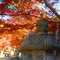 紅葉と石灯篭