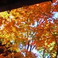 伽藍堂の紅葉
