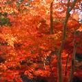 晩秋の紅葉