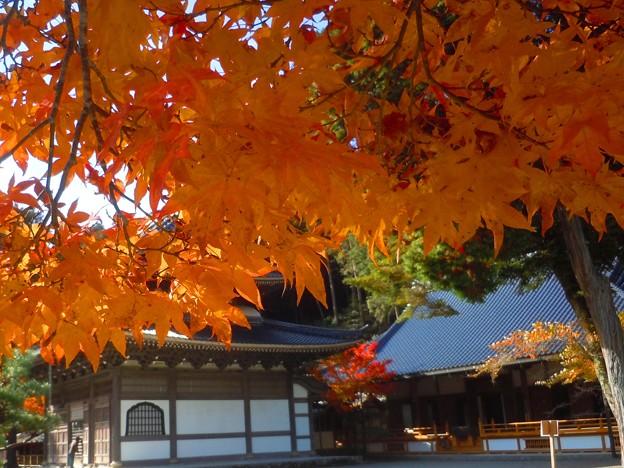 晩秋の佛通寺境内