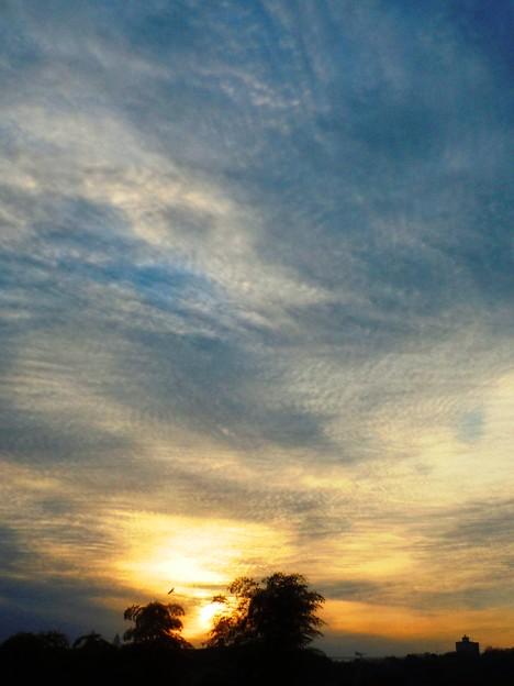 今朝の日の出 in 千光寺山