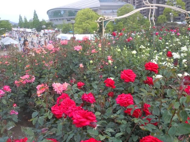 薔薇の甘い香りに包まれて