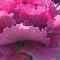 写真: 真冬のお花畑にて