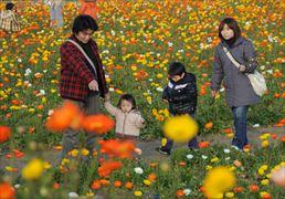 花摘み_005