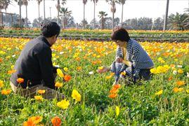 花摘み_009