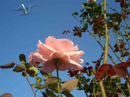 rose-181030-1