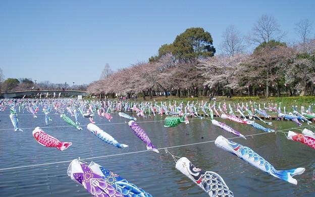 014d_ギネス鯉のぼり2012