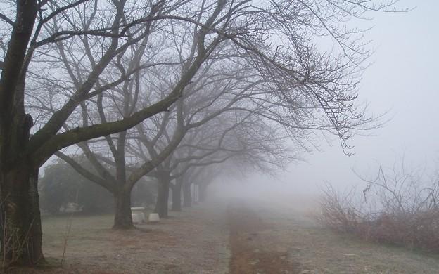 023b2_20140122霧の朝(2)