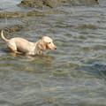 Photos: プリン泳ぐ