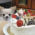 カメラはケーキを選びました