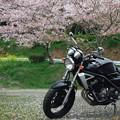 写真: 花見の鉄騎