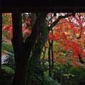 写真: 三門より紅葉