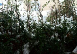 snow2014-a