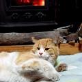 Photos: コゾとストーブ 「このいい匂いは何だ?」 燗銅壺の香りです