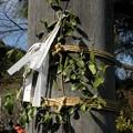 シャハト35mm 高麗神社鳥居