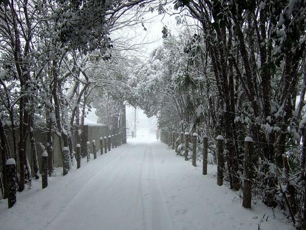 雪道 今年2度目の雪です