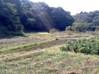 谷戸の秋。