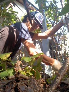 伐採作業中(大船地区ボランティア)。