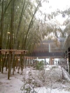 鎌倉芸術館 中庭。