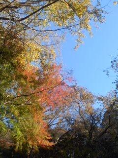 紅葉の錦(11月30日、かまくら巡り)