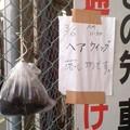 写真: 落とし物(3月9日、北鎌倉)