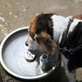 Photos: Aibo水を飲む
