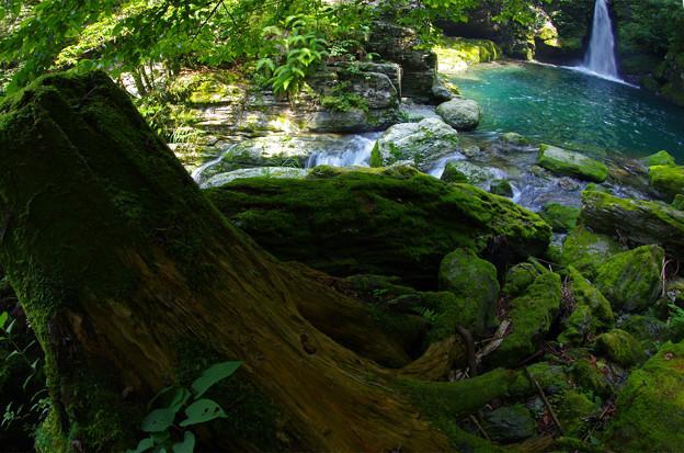 Photos: 緑に満ちた渓間