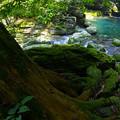 緑に満ちた渓間