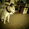 Photos: 太宰治の顔写真