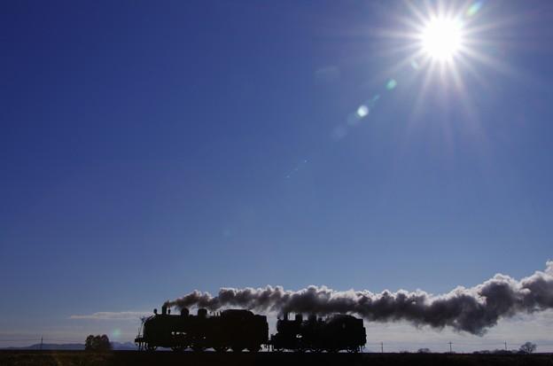 写真: 正月の柔らかな陽射しに可愛いらしいシルエットが浮かぶ@真岡鐵道 寺内-真岡 2014/01/05