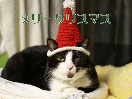 メリークリスマス! たろ