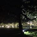 Photos: りんご花まつり ライトアップ 1