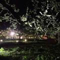 Photos: りんご公園 ライトアップ 2