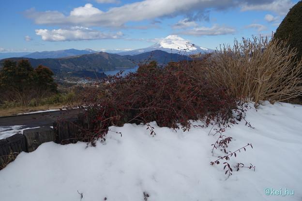 大観山からの富士山雪化粧