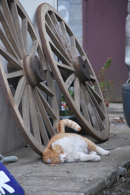 大八車の車輪