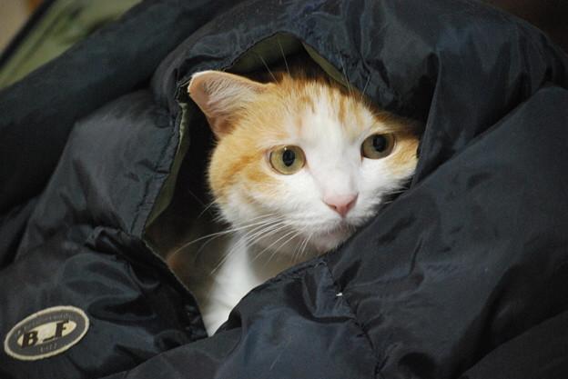 ダウンベストが猫ベッド