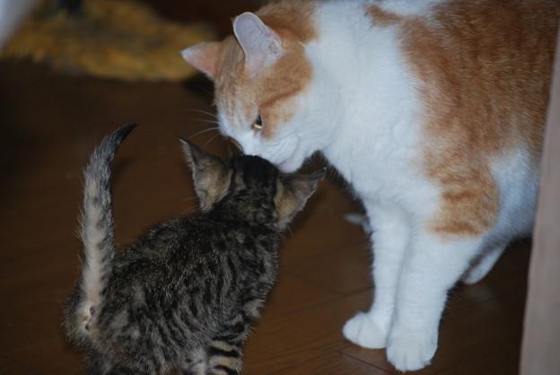 捨て猫保護した人から…持ってこられました